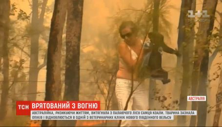 Голыми руками вытащила из пламени: австралийка спасла коалу из пылающего леса