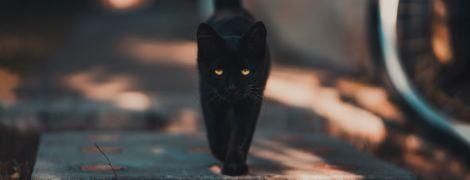 В США утерянная кошка нашлась  в двух тысячах километров от дома