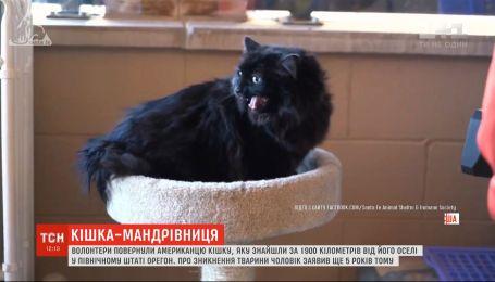Американцу вернули его кошку, найденную почти за 2 тысячи километров от дома