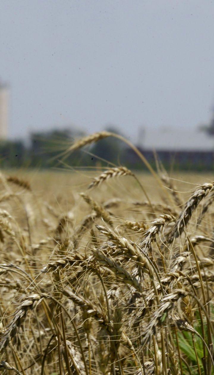 Україна встановила рекорд за експортом зерна: чи вистачить хлібу самим українцям в умовах засухи