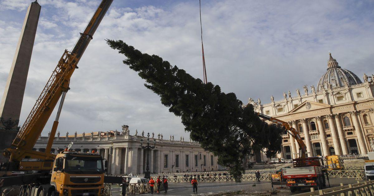 На площади Ватикана установили 26-метровую рождественскую елку