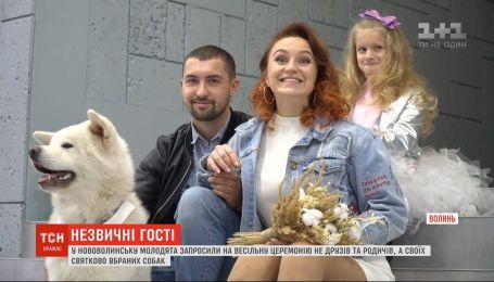У Нововолинську молодята запросили на весілля не друзів і родичів, а своїх собак