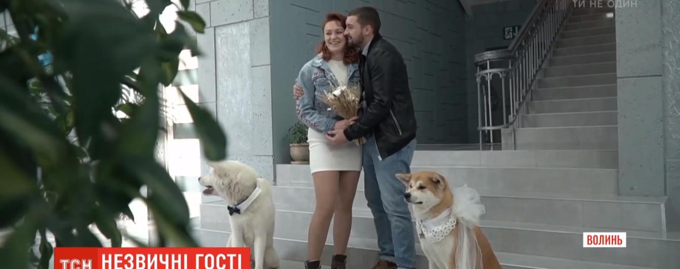 Вместо гостей - собаки: молодожены из Волыни устроили оригинальную свадебную церемонию