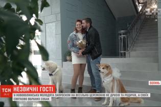 Замість гостей - собаки: молодята із Волині влаштували оригінальну весільну церемонію