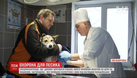Барсик, которого волок за авто чиновник в Хмельницкой области, находится под наблюдением полицейских