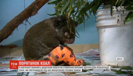 В Австралии создадут центры реабилитации коал, пострадавших от лесных пожаров