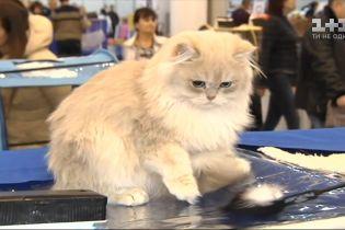 Найближчими вихідними втретє пройде найбільша виставка котів в Україні