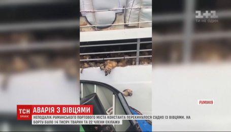 Судно с 14 тысячами овец перевернулось в Черном море у румынского побережья