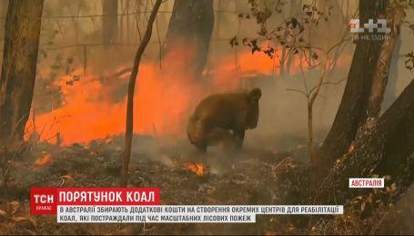 Фонд по сбору средств для пострадавших от лесных пожаров животных создали в Австралии