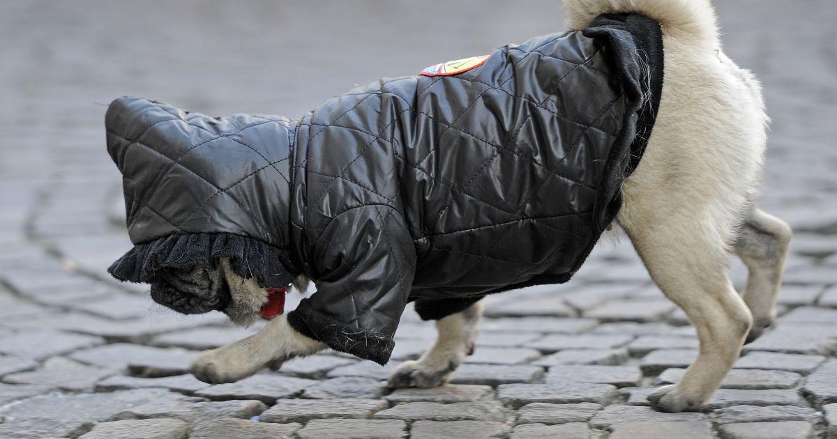 Прогноз погоди на 11 листопада: в Україні похолодало, вночі заморозки, місцями туман