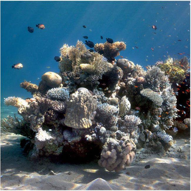 Фото океану до та після 3