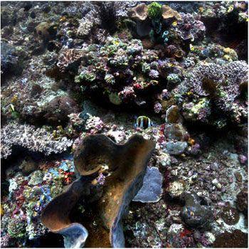 Фото океану до та після 6