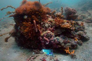 """Нова технологія """"видаляє"""" воду з світлин. Кольори справжнього світу океану в захопливих фото до та після"""