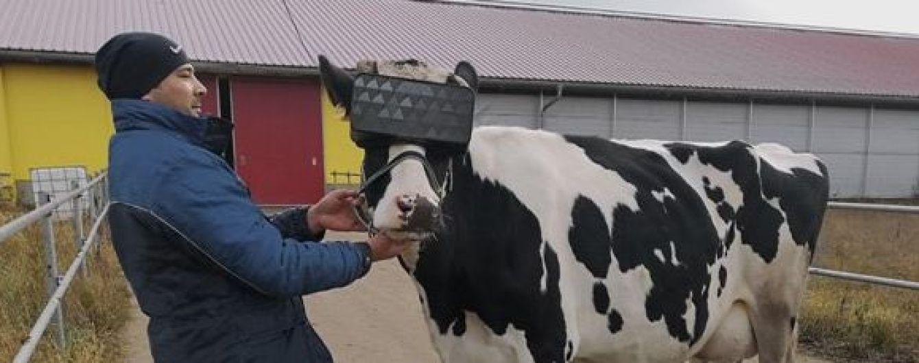 В РФ на ферме коровы в VR-очках пасутся на виртуальном поле