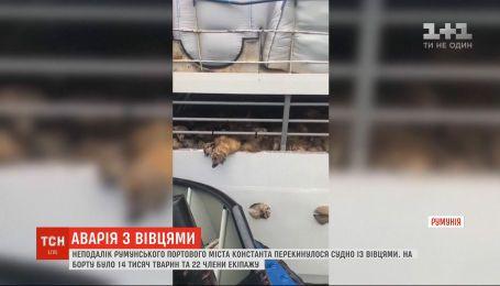 В Черном море перевернулось судно с более 14 тыс. овцами на борту