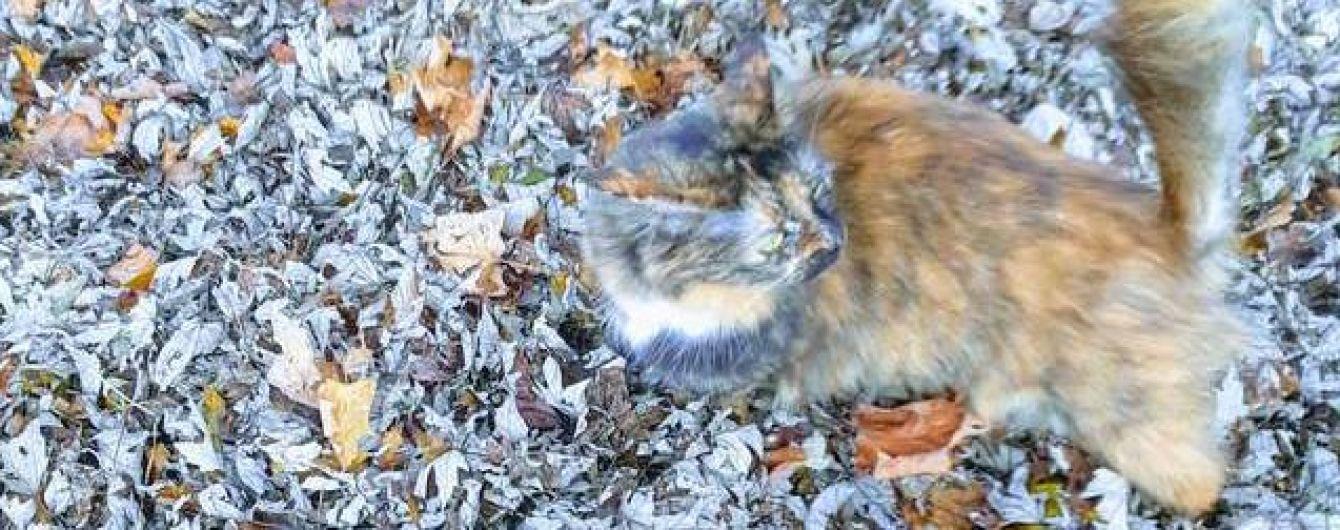 Найди кота: в Сети хозяйка пушистика показала осеннюю фотозагадку