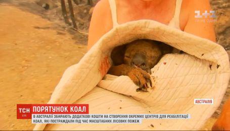 В Австралії створять центри реабілітації коал, які постраждали від лісових пожеж