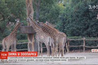 Через сильні похолодання тваринам у Шанхайському зоопарку змінили раціон