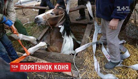 На Ровенщине из силосной ямы сообща вытаскивали 600-килограммовую лошадь