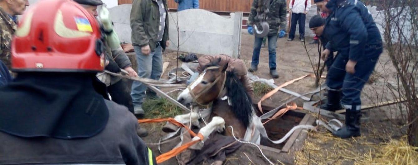 На Ровенщине конь упал в яму с кормом, но его вытащили спасатели