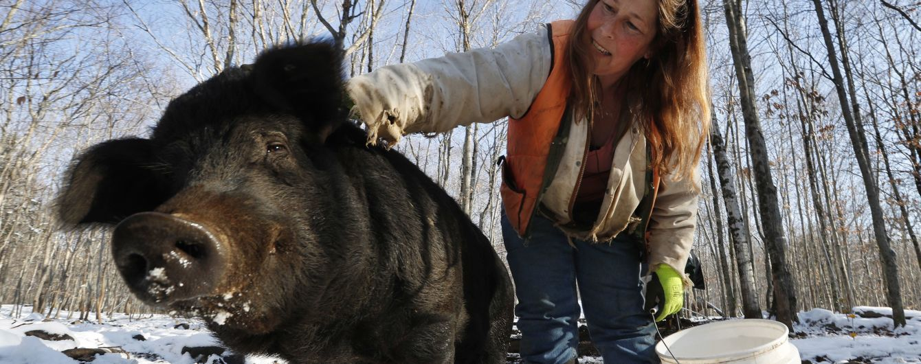 У США дикі свині загризли насмерть жінку, яка прямувала на роботу