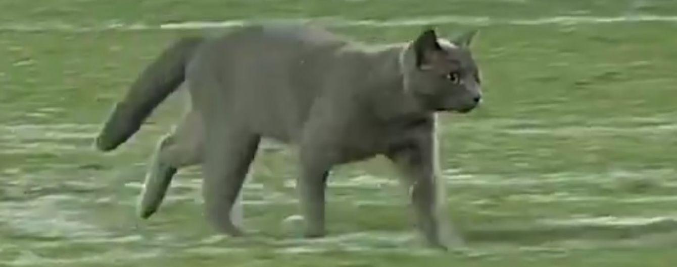 """""""Візьміть його в команду"""". Сірий котик став героєм футбольного матчу в США"""