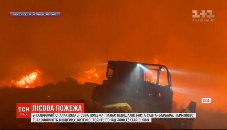 Масштабний вогонь палає у лісах Каліфорнії - горить неподалік Санта-Барбари