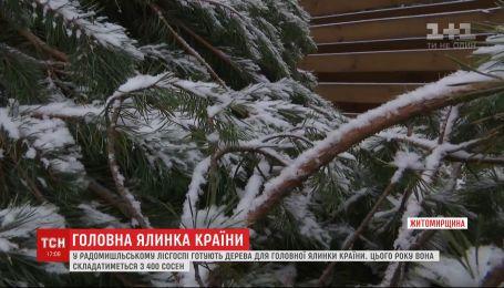 Головну ялинку України цьогоріч привезуть з Житомирщини