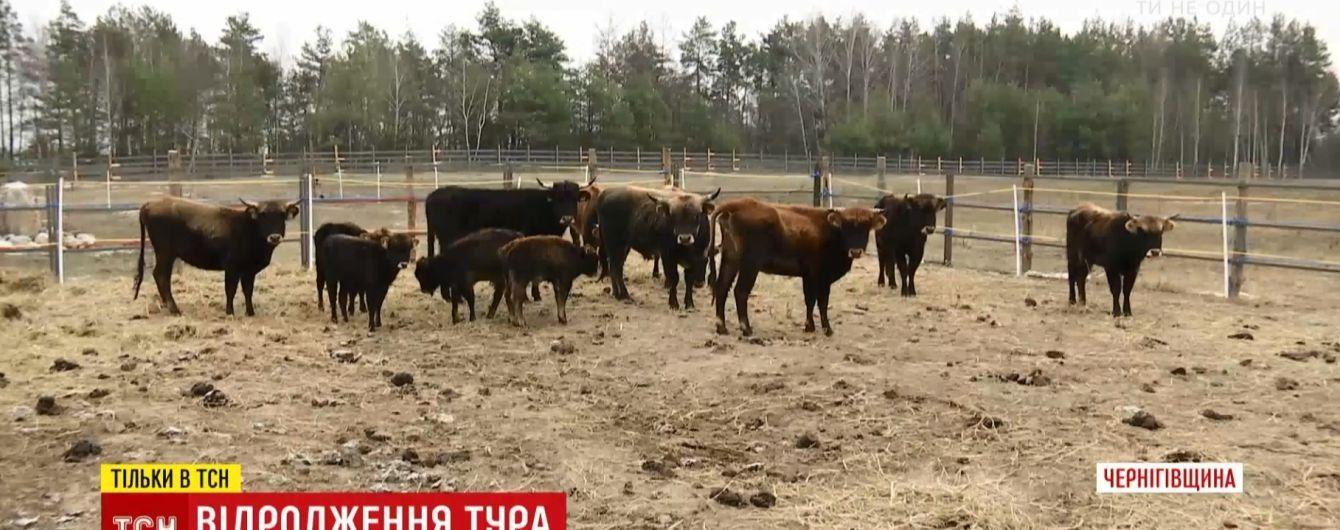 В Украину вернули туров, которые исчезли более 400 лет назад