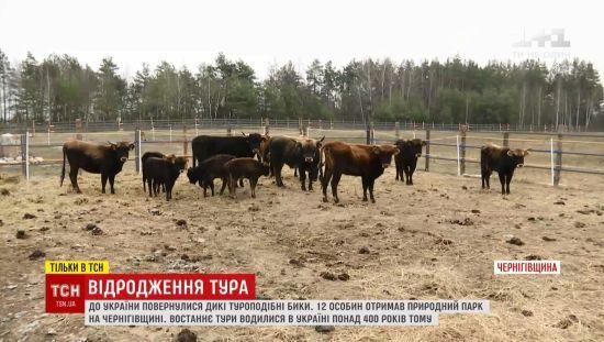 В Україну повернули турів, які зникли понад 400 років тому