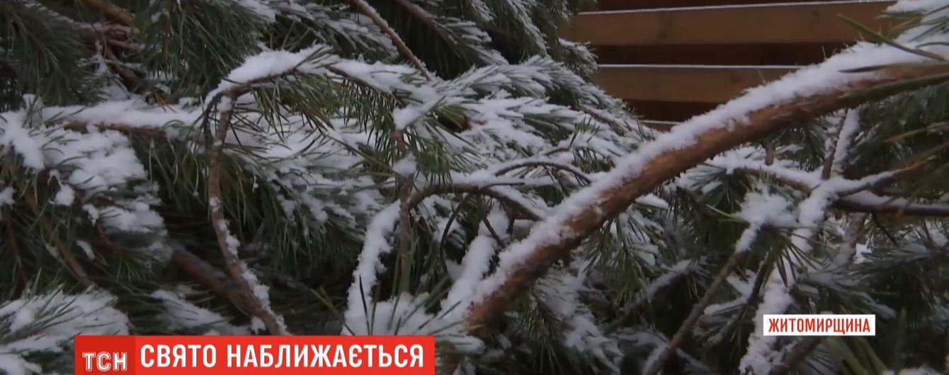 Для головної ялинки країни в Києві заготували чотири сотні сосен. Вартість усіх дерев – 125 тисяч гривень