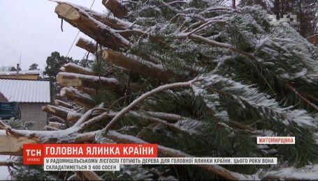 ТСН дізналась, який вигляд матиме головне новорічне дерево України