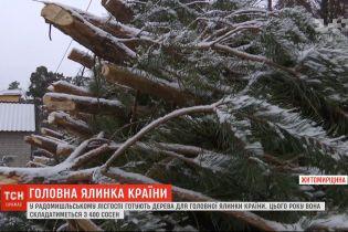 ТСН узнала, как будет выглядеть главное новогоднее дерево Украины