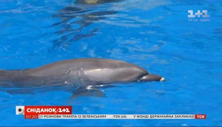 """Чому дельфінам не місце в дельфінаріях - влог """"Сніданку"""""""