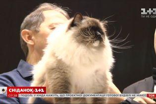 Унікальні породи та дух змагань: чому варто відвідати найбільшу виставку котів у Києві