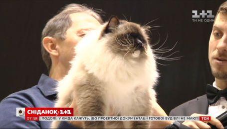 Уникальные породы и дух соревнований: почему стоит посетить крупнейшую выставку кошек в Киеве