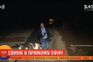 На грецького журналіста під час роботи у прямому ефірі напала свиня