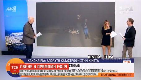 Большая свинья атаковала греческого журналиста во время прямого эфира