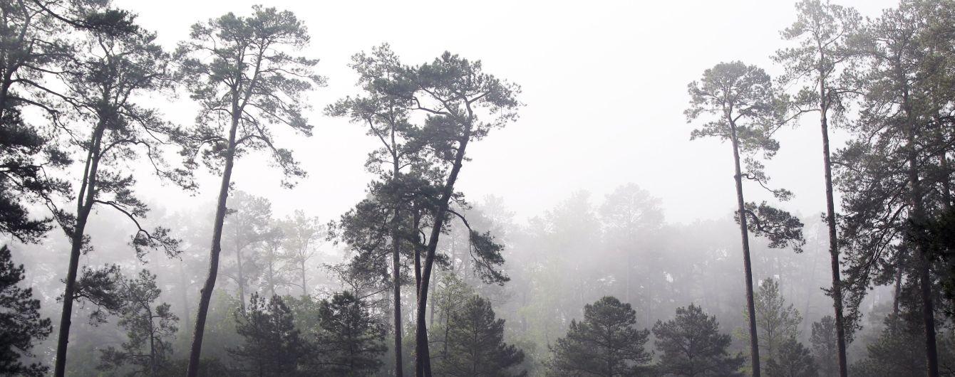 Туман, дождь и мокрый снег: прогноз погоды на четверг