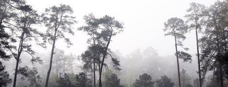 Украину накрывает туман, а местами с дождем: погода на четверг