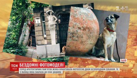 Львів'янка влаштовує фотосесії двом безпородним псам