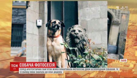Жительница Львова устраивает фотосессии, рекламирующие бездомных собак