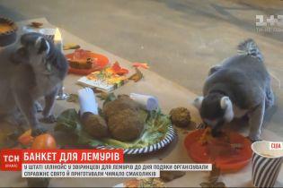 Праздничный ужин устроили для лемуров ко Дню благодарения в зоопарке США