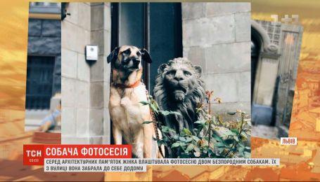Чотирилапі моделі: львів'янка влаштувала фотосесію для своїх двох безпородих собак