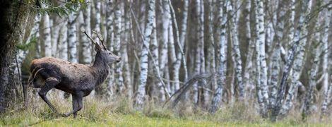 В Україні проведуть інвентаризацію лісів - Рада підтримала законопроєкт