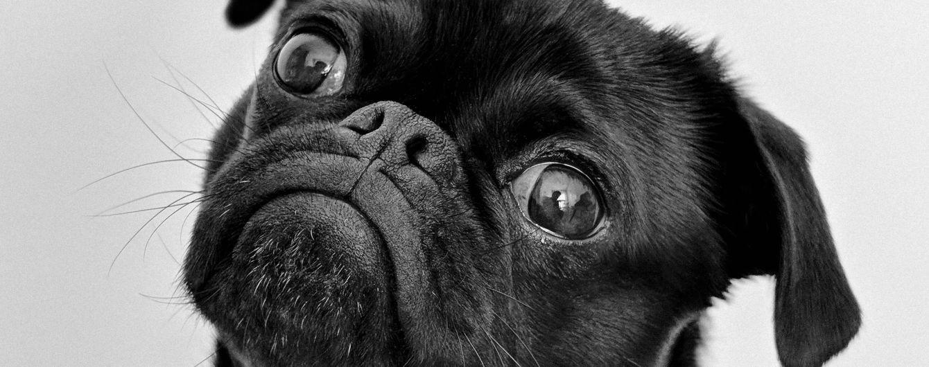 У Кривому Розі поліцейський проштрикнуввилами собаку, а потім кинув його у багаття