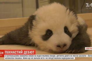 Сеть умилил малыш панды, который не мог заснуть из-за икоту