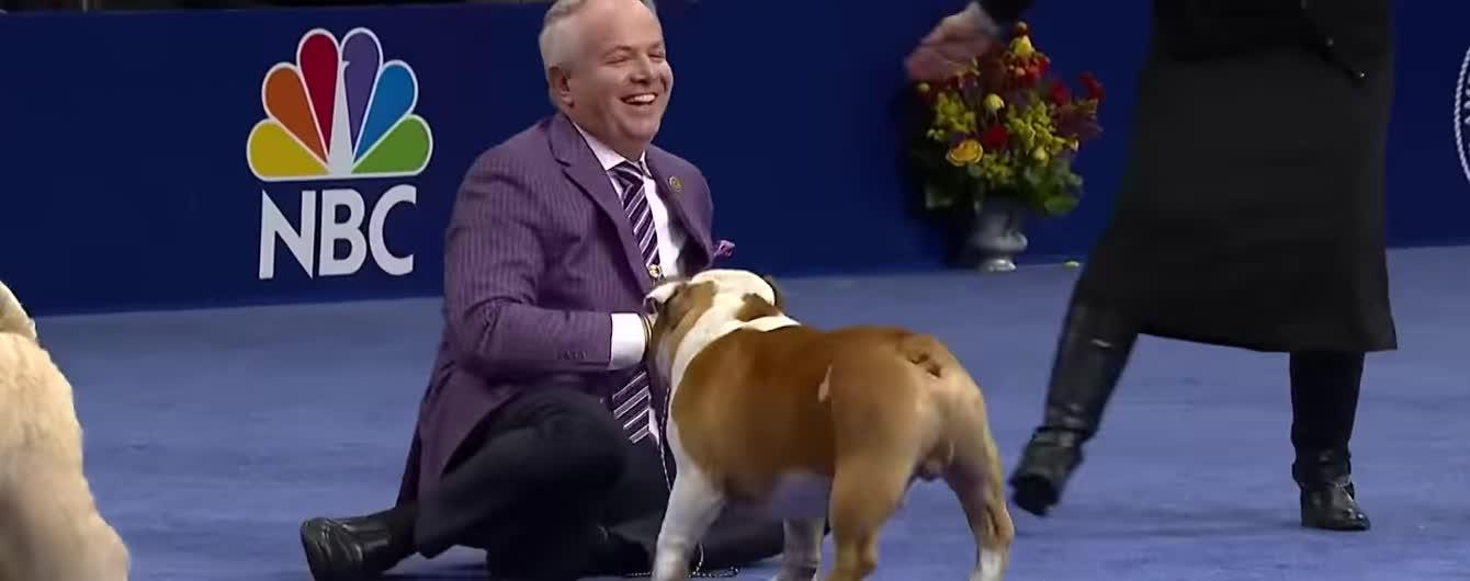 Будьдог Тор победил 2000 собак на Национальном дог-шоу в США