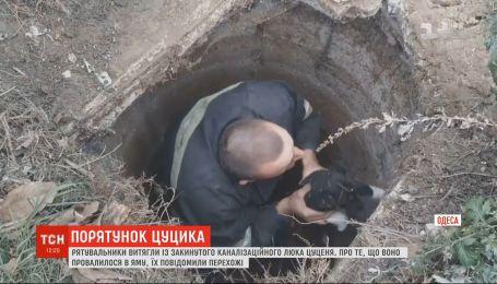 Маленького щенка спасли из канализационного люка в Одесской области