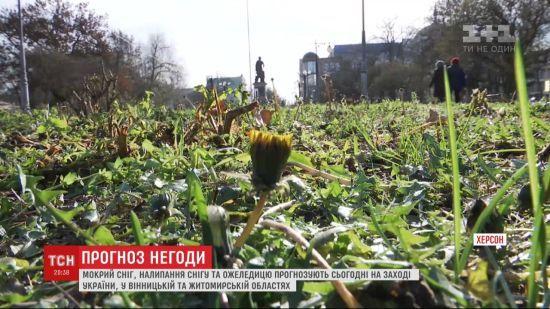 Карпати і Захід країни накриває снігом, а в Херсоні цвіте кульбаба: якими міжсезонними аномаліями зустріла зима українців